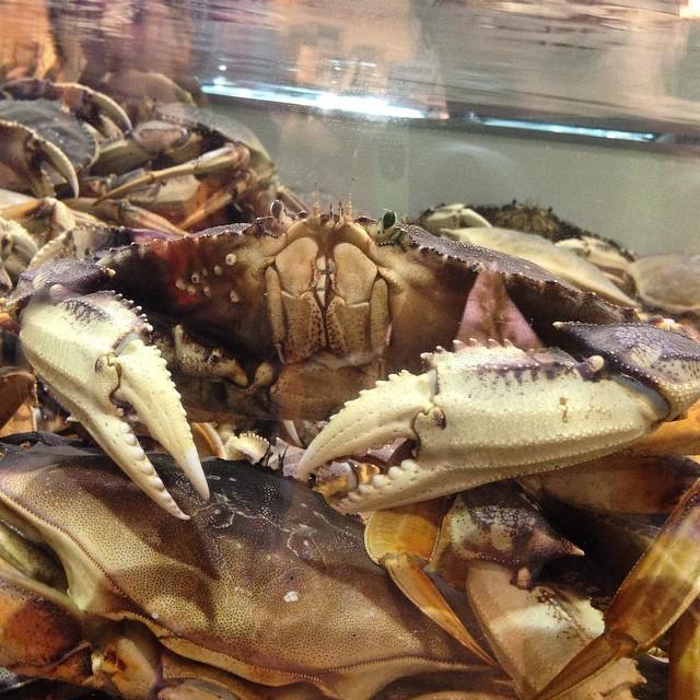 Skip the aquarium, just head to Central Market! #iloveseattle #andpeopleeatthese #theygivemethewillies
